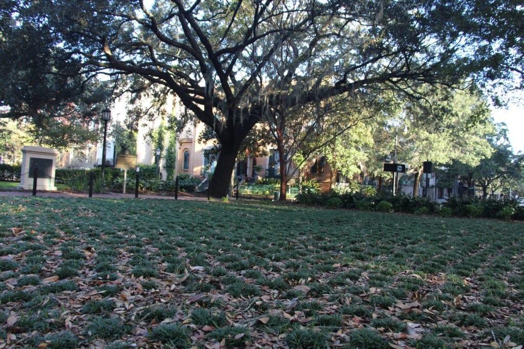 Squares in Savannah