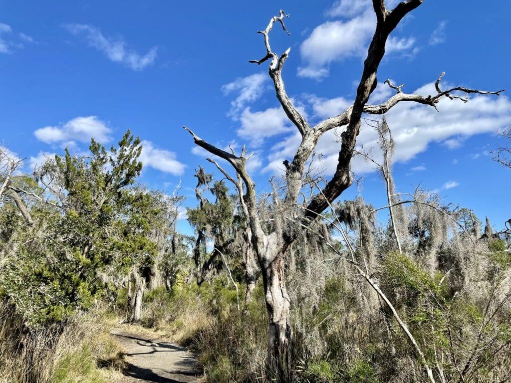 Walking Trail Skidaway Island State Park